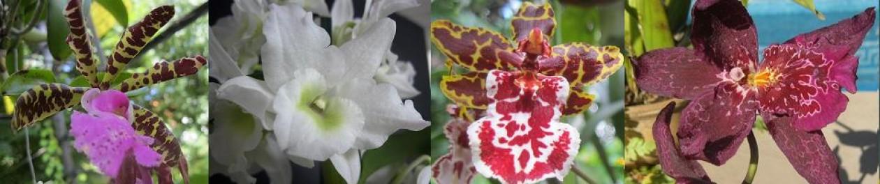 Orquideasyalgomas
