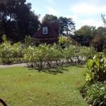 blog plantacion1