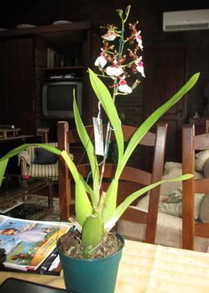 Floraciones Mayo (Primera semana)