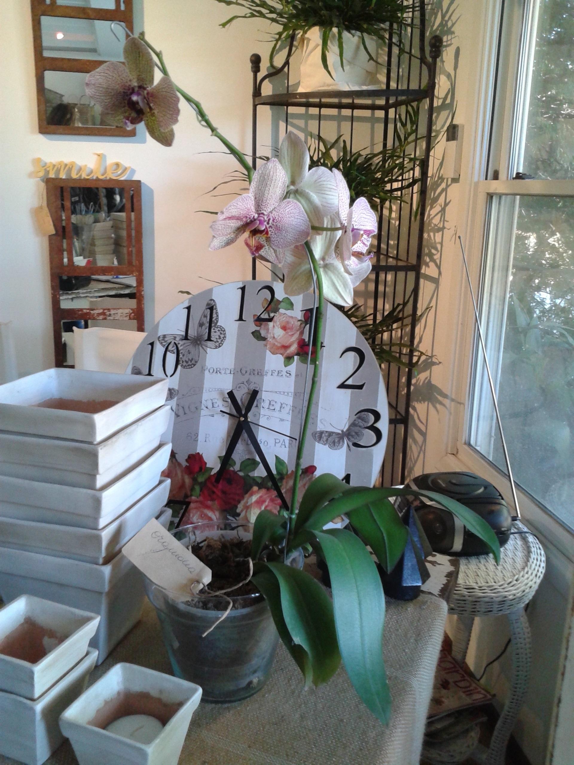 la plantacion tata flowers